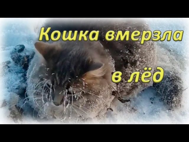 Спасение кошки, которая вмёрзла в лёд ┃ Cat is rescued after all four paws got frozen in ice