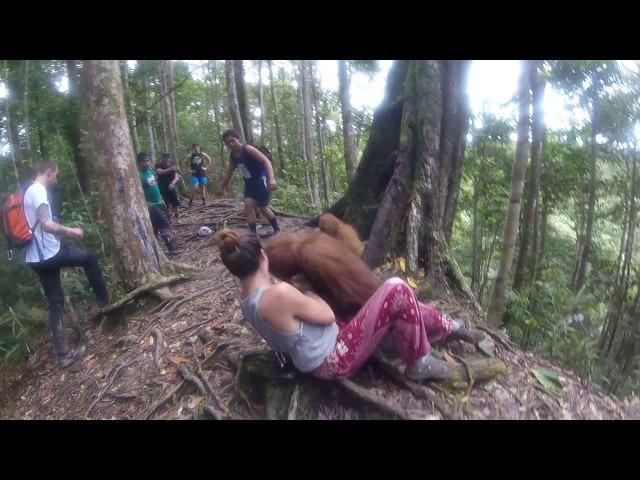 Held Hostage by an Orangutan, Bukit Lawang Jungle