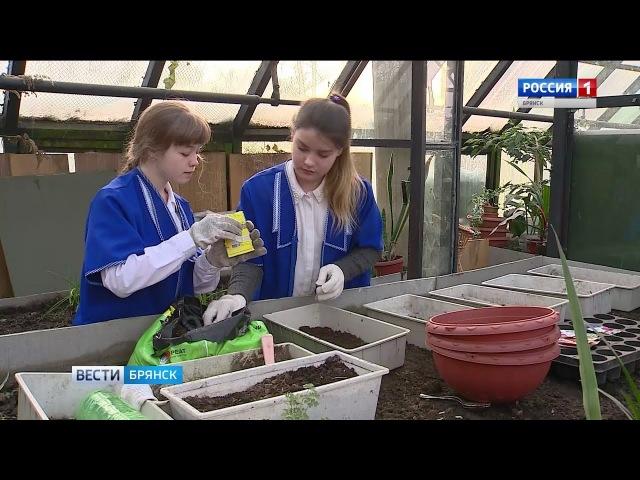 В Брянске возрождают школьные теплицы