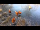 Chickens and cat on ice