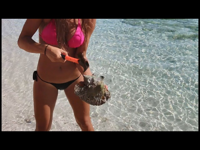 HOW TO CATCH, CLEAN COOK LOBSTER and CONCH in the BAHAMAS!