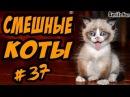 Приколы с Котами ДО СЛЁЗ Смешные коты и кошки 2017