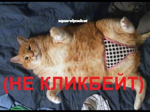 [shc] Кот-Паркурщик | RYTP