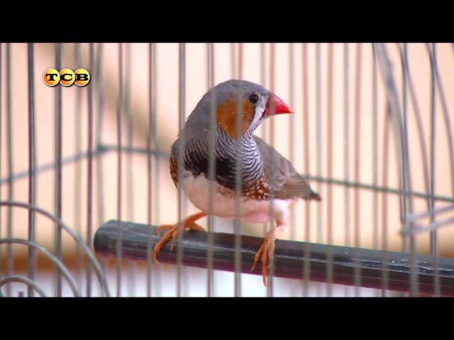 Пение птиц. Как распознать голос