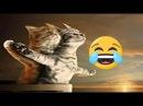Смешные кошки приколы про кошек и котов 2017 Очень смешное видео - видео приколы с...