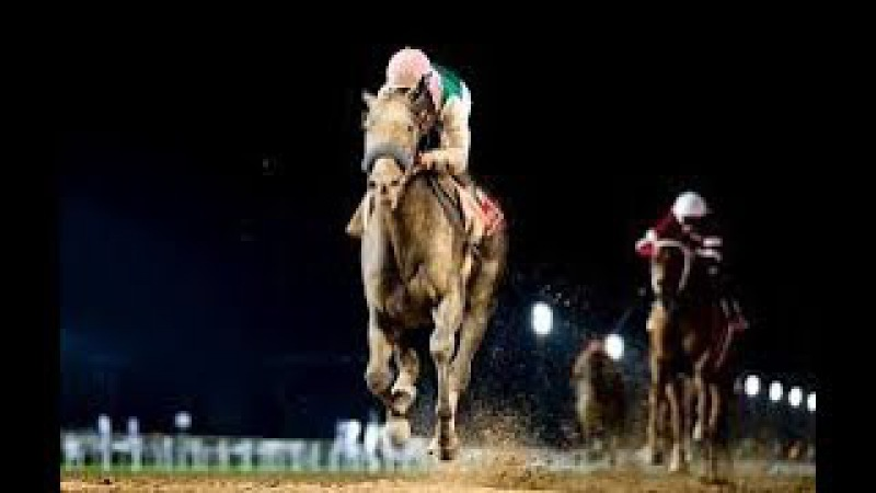 Collected edges heavily favored Arrogate to win Pacific Classic at Del Mar