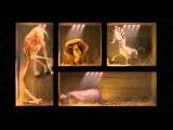 Madagascar - Le casse degli animali