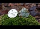 Нашел полно 150-летних монет у исчезнувшей старой дороги! В Поисках Клада и Сокровищ