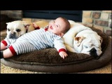 CUTEST Relationship Between Bulldog And Baby || Funny Pets Video Compilation