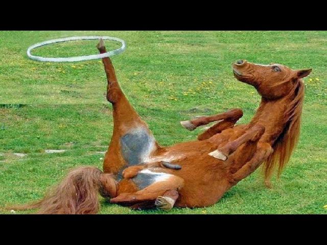 Funny Horses - Cute Ponies - Funny Horse Videos - Mini Horse Compilation
