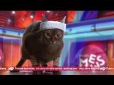 News Mews #2. Олимпиада и день котституции