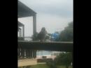 Прилетел на мой балкон и поделал мне доброго утра