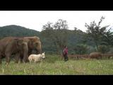 Elephant Nature Parks ПРИЮТ ДЛЯ СЛОНОВ В ТАЙЛАНДЕ