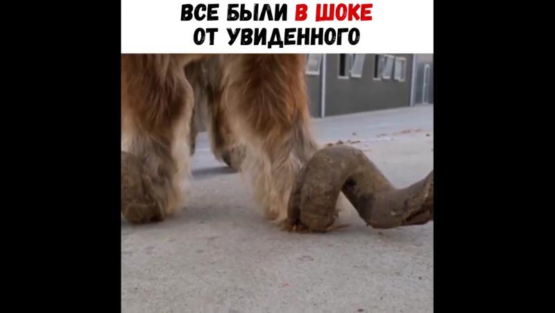Бессердечные люди заперли этого пони на 10 лет 😱😱... Москва 10.10.2017