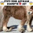Бессердечные люди заперли этого пони на 10 лет 😱😱 Москва 10 10 2017