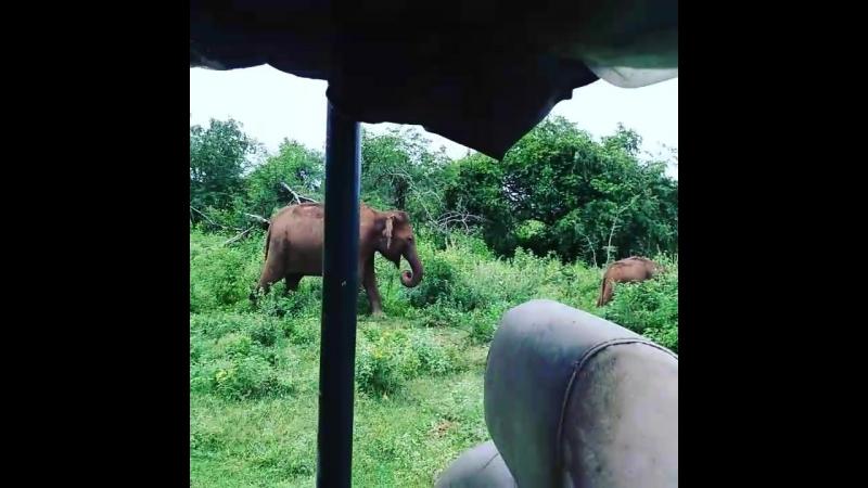 Udawalawa national park with gayan tours srilanka