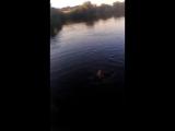 девушка показывает как нало плавать