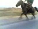 нетипичная махачкала самая быстрая лошадь в мире.mp4