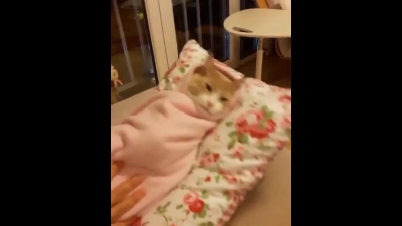 Колыбель для кошки