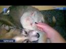 Операция бездомному щенку Адольфу прошла успешно