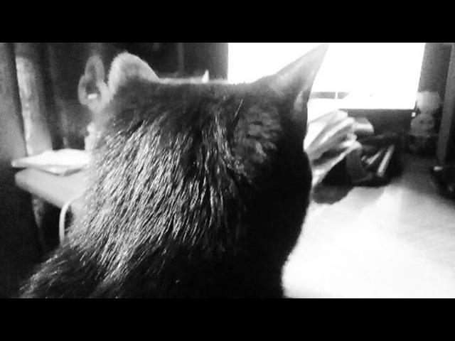 Matsumoto_queen video