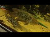 Ремонт крышки и освещения в аквариуме