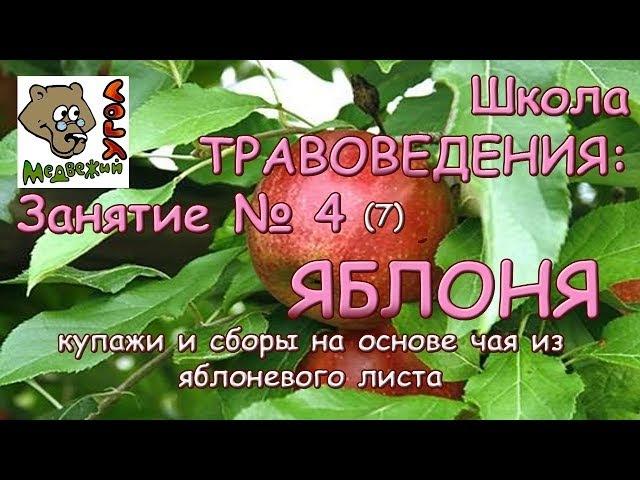 Школа ТРАВОВЕДЕНИЯ: Занятие №4 (7) ЯБЛОНЯ: купажи и сборы на основе чая из яблоневого листа