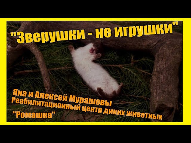 Жизнь замечательных людей: Алексей и Яна Мурашовы. Центр реабилитации диких жив ...