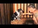 Смешные собаки и Смешные кошки Идут в баню На новый год 2018 Pets in sauna Приколы с живо ...