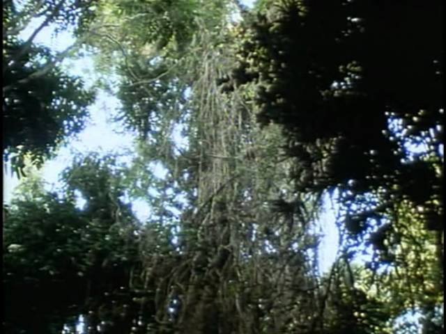20 - Одиссея Жака Кусто - Призрак морской черепахи 20 - jlbcctz ;frf recnj - ghbphfr vjhcrjq xthtgf[b
