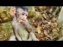 WOW! What This Is Cute Baby Monkey Newborn? It's Look Like So Beautiful Baby Monkey