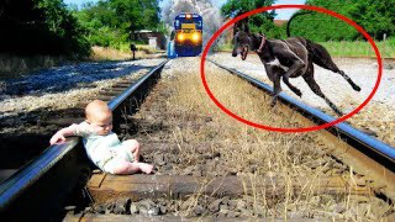 What a Loyal Dog! It Doesn't Allow Anything to Hurt the Baby | Dog Love Baby Video Compilation