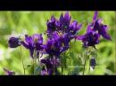 Нежные цветы для души Лечебная музыка для ВАШЕГО ТЕЛА