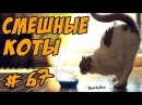 Смешные Коты и Кошки До Слёз 2017 Приколы с котами Funny Cats Compilation
