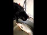 Мася рыбачка