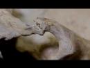 Тайны римских черепов 2016