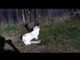 В России даже коты матерятся