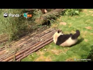 Падения панды
