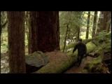 Если дерево упадет История фронта освобождения Земли  If a Tree Falls A Story of the Earth Liberation Front (2011)