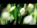 Вальс цветов 💐🌹🌼🌸🌺🌹