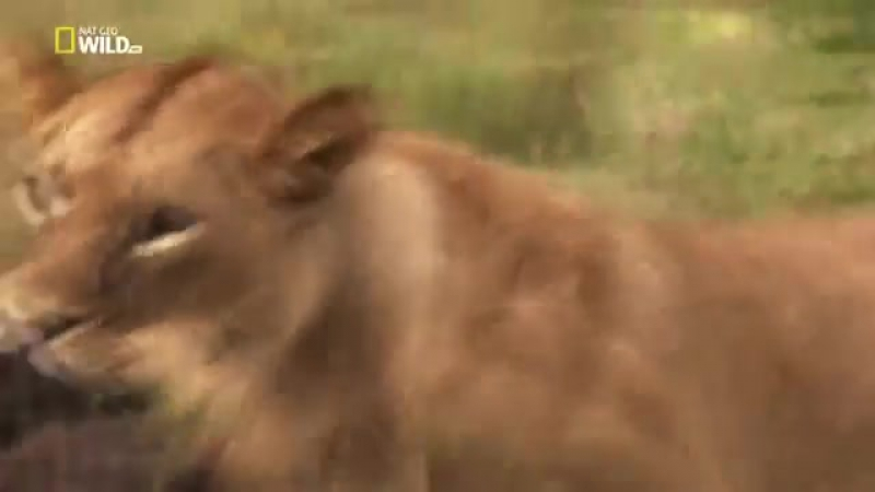 Мир дикой природы Животные саванны Документальный фильм