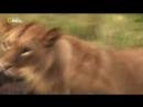 Мир дикой природы. Животные саванны. Документальный фильм