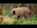 Любовные игры в дикой природе