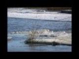 Белая лебедь - Галина Ненашева