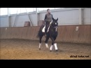 Ахалтекинский жеребец Рами Шаэль, тренировка, выездка/Akhal-teke stallion Rami-Shael, dressage
