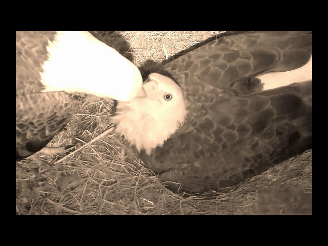 SWFL Eagles 12 26 17 1048pm Aww sweet E10 Swap out M15 did not want to get up