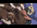 Приколы с кошками и котами Подборка смешных и интересных видео с котиками и коше...