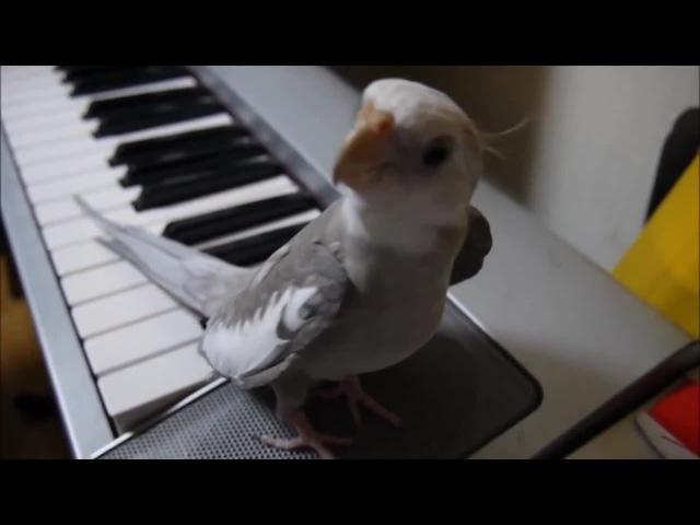 Singing Totoro