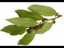 Специи которые сводят с ума Что обнаружили в листьях ЛАВРА современные химики Тайны Чапман