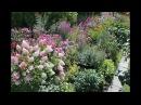 Декоративные параметры растений как необходимая составляющая цветника